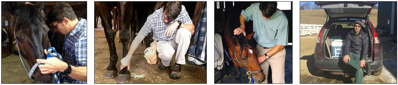 Veterinarian Doctor Landau Helping Horses with Alternative Holistic Medicine