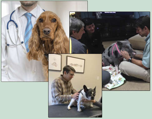 Partnering with your Veterinarian is a must!
