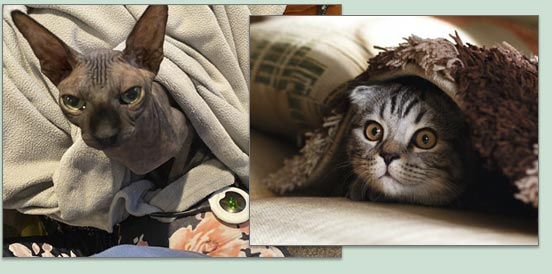 Veterinary Cat Treatment