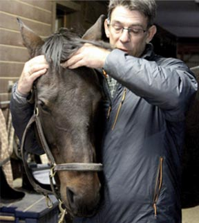 chiropractic treatment for horses