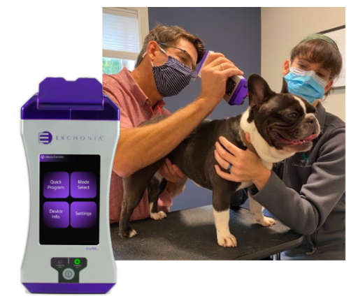 laser therapy for dogs and other animals is highly effective