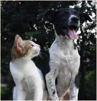 cat and dog friends, hanging out and happy